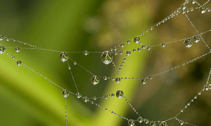 Beautiful spider web with water droplets
